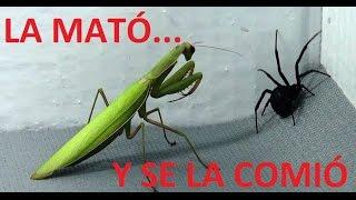 Top 5:  Batallas de Insectos Más INCREIBLES del Mundo | Calidad Sunjuano