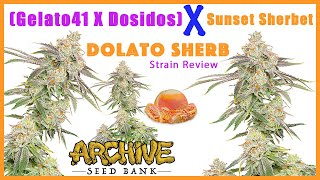 SUNSET SHERBET x DOLATO | Strain Review by The Cannabis Connoisseur Connection 420