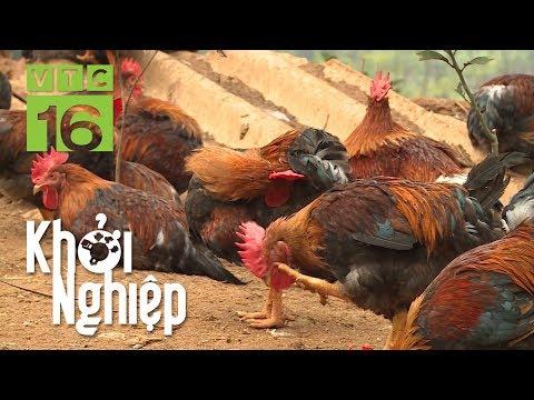 Bệnh máu trắng ở gà: Hoang mang với án tử I VTC16 - Thời lượng: 30 phút.