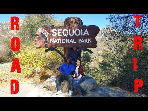 Road Trip To Sequoia!  📕 Video Diary #50