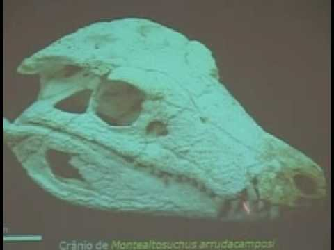 Prehistoric killer Crocodile discovered Video