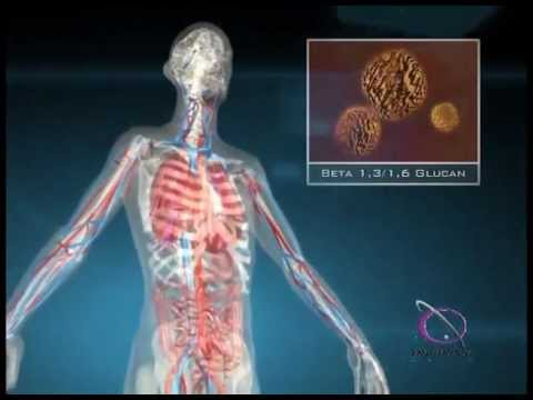 How Beta Glucan Affects the Immune System