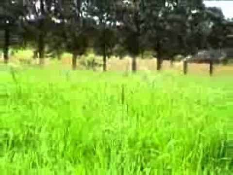 Irrigação de Pastagem Fartura Consultoria e Super Campo irrigação.wmv