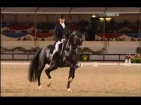 Horses in Dressage