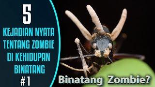 Video 5 Kejadian nyata tentang Zombie di kehidupan Binatang #1 MP3, 3GP, MP4, WEBM, AVI, FLV Oktober 2018