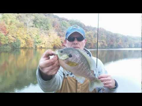 Big Bluegill on Nightcrawler Rigs – Panfish Series