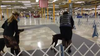 Video of Vega Finishing Her Championship!