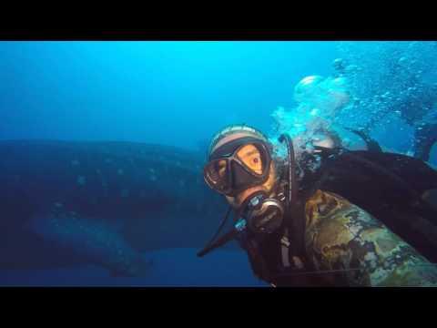 GIANT WHALE SHARK DARWIN ISLAND