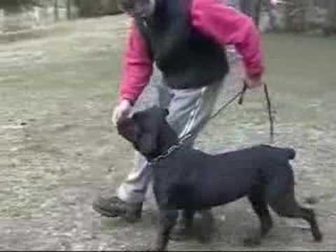 Entrenamiento básico de obediencia para perros