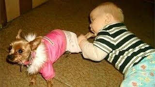 Video Wanna SCREAM WITH LAUGHTER? - Funny KIDS vs PETS VIDEOS will take care of this! MP3, 3GP, MP4, WEBM, AVI, FLV Juni 2018