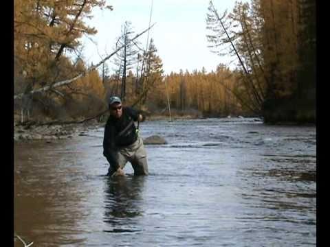 хариус рыбалка осень видео