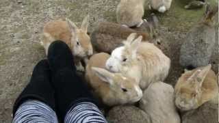 Feeding Bunnies on Ōkunoshima, Rabbit Island in Japan