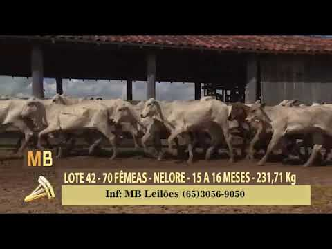 2º MEGA LEILÃO VIRTUAL MB LEILÕES