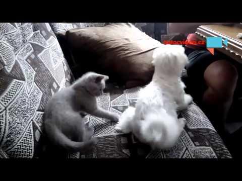 Kočičí predátor
