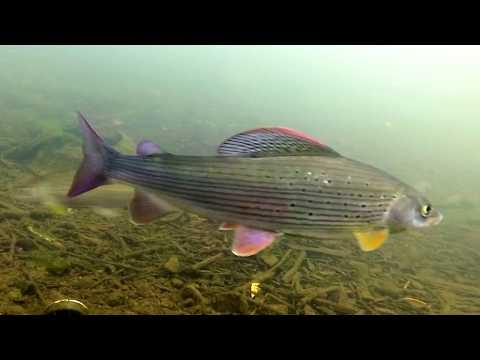 Hegyek-völgyek halai - teljes film