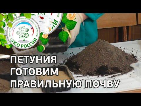 КАК ПРИГОТОВИТЬ ПОЧВУ ДЛЯ ЦВЕТОВ ПЕТУНИЯ. Подготовка почвы для посева семян петунии.