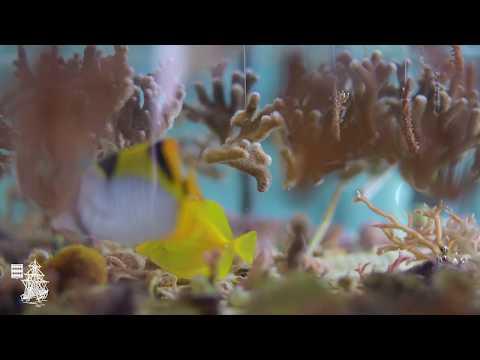 Culture du corail
