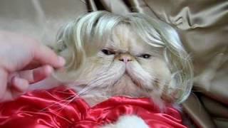 Кошка Мэрилин Монро