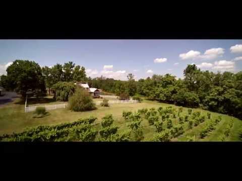 Wine Country - Shenandoah Vineyards