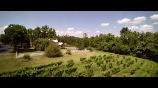 Wine Country - Shenandoah Vineyards