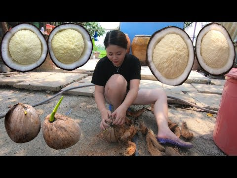 Cùng em gái miền tây Ăn thử Mộng Dừa khổng lồ - Thời lượng: 22:10.