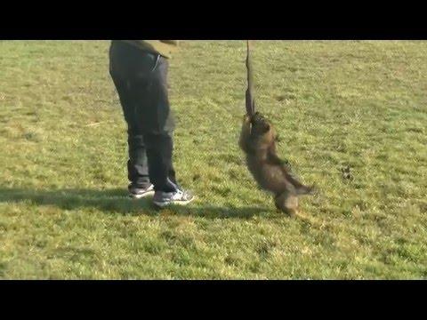 Vendita cucciole linee da lavoro