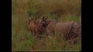 Jungle Safari, Chitwan