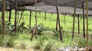 Crime violento em Bauru