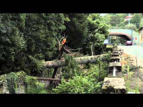 Porto Valtravaglia, forte vento abbatte pini secolari
