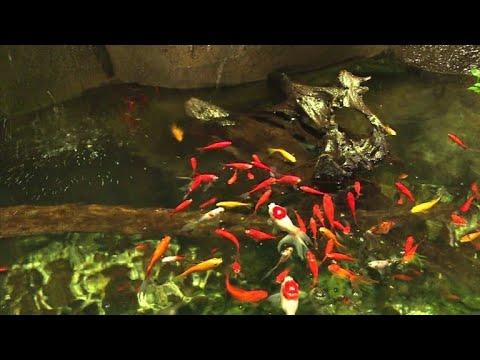 Aquarium de Paris (Cinéaqua): Neues Zuhause für ver ...