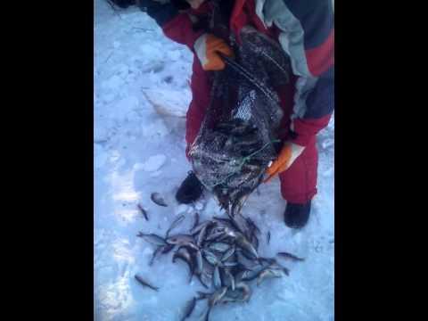 рыбалка на китайскую морду