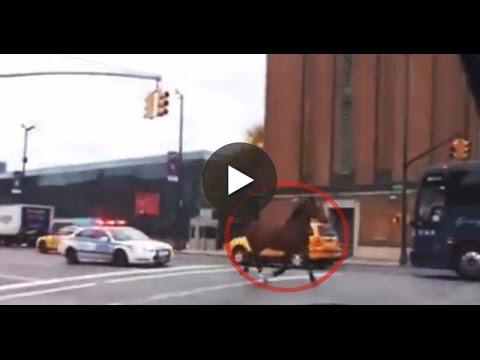 YouTube: policía de Nueva York persigue a caballo fugitivo