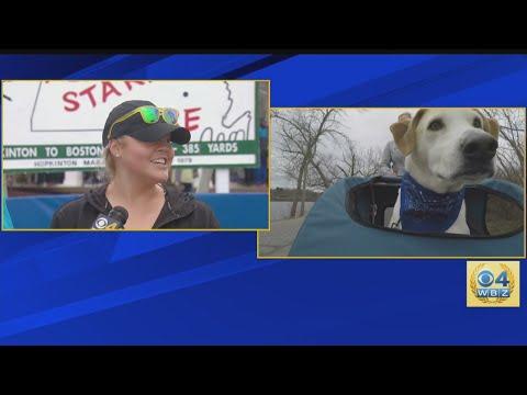 Meg Greenwich To Run Boston Marathon Twice, Once With Therapy Dog
