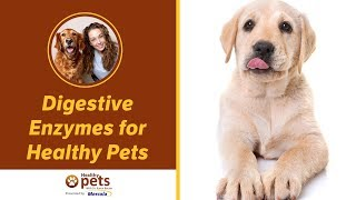 Digestive Enzymes for Healthy Pets