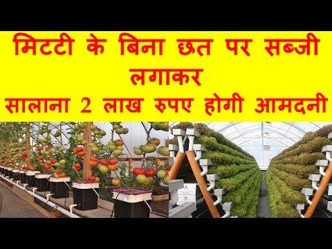 Video मिटटी के बिना छत पर सब्जी लगाकर सालाना 2  लाख रुपये होगी आमदनी download in MP3, 3GP, MP4, WEBM, AVI, FLV January 2017