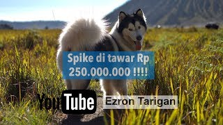Video Spike di tawar orang Rp 250.000.000 !!! - Ezron Tarigan & Humble Spiker #Dailyvlog #StoryTelling #1 MP3, 3GP, MP4, WEBM, AVI, FLV Desember 2018