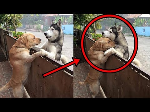 Funny cat videos - Cute is Not Enough - Funny Cats and Dogs Compilation #243