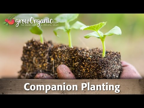 planting - Learn the science behind companion planting. Leverage the effects of various plants on their environment to your advantage.