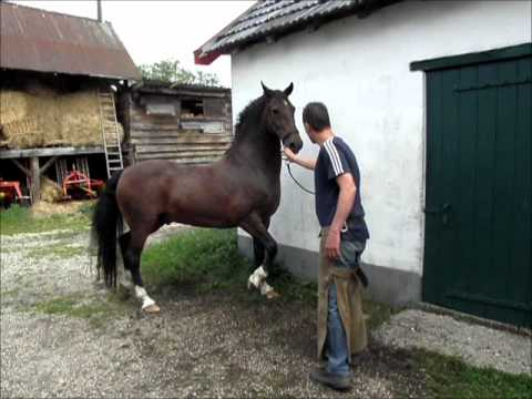 The sadness of Hackney horse Williams farrier trauma