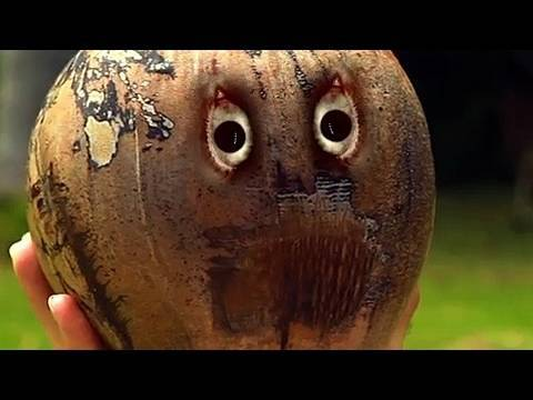 Beware of Coconut!