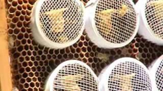 تربية وإكثار نحل العسل للمرأة الريفية  في عُمان 2 - فيلم
