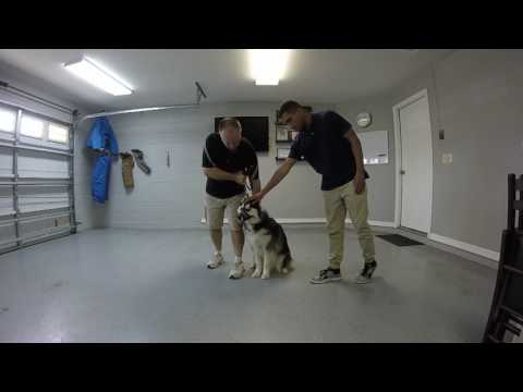 Clermont County Dog Training