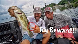 Video Caught a Fish with $REWARD$ Tag - First Time EVER!! MP3, 3GP, MP4, WEBM, AVI, FLV Desember 2018