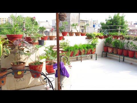 Garden Overview || Fun Gardening || 17 Aug, 2017