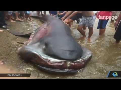rare and strange shark