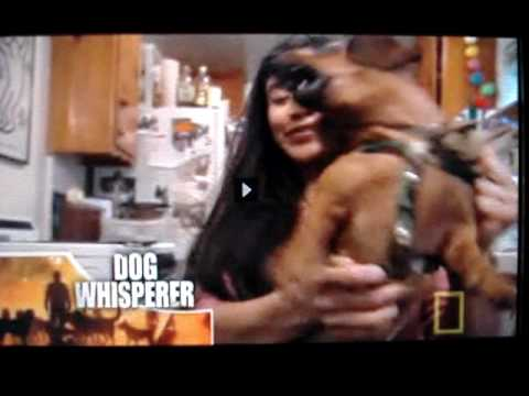 dog whisperer - bassotto possessivo!