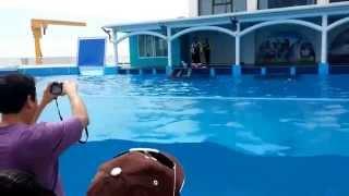 Este es un video de visita a acuario de Veracruz