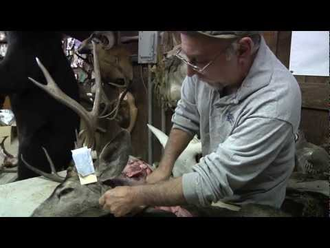 Testa's Taxidermy Tip's – Neck Meat