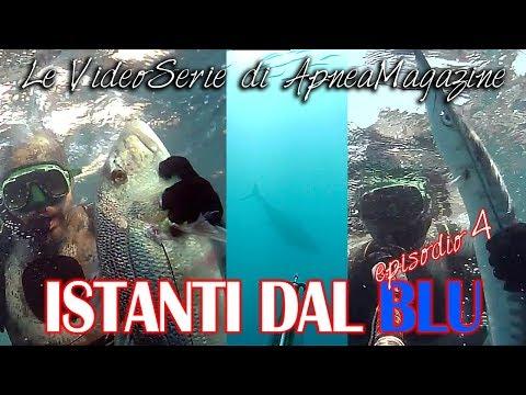Pescasub Dentice e Barracuda: Predatori all'Argentario - Apnea Magazine