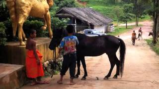 Visit To The Golden Horse Temple In Thailand from Buddhas Lost Children Documentary